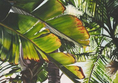 Banana Palm by Kathleen Alexander